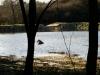 Dolní rybník